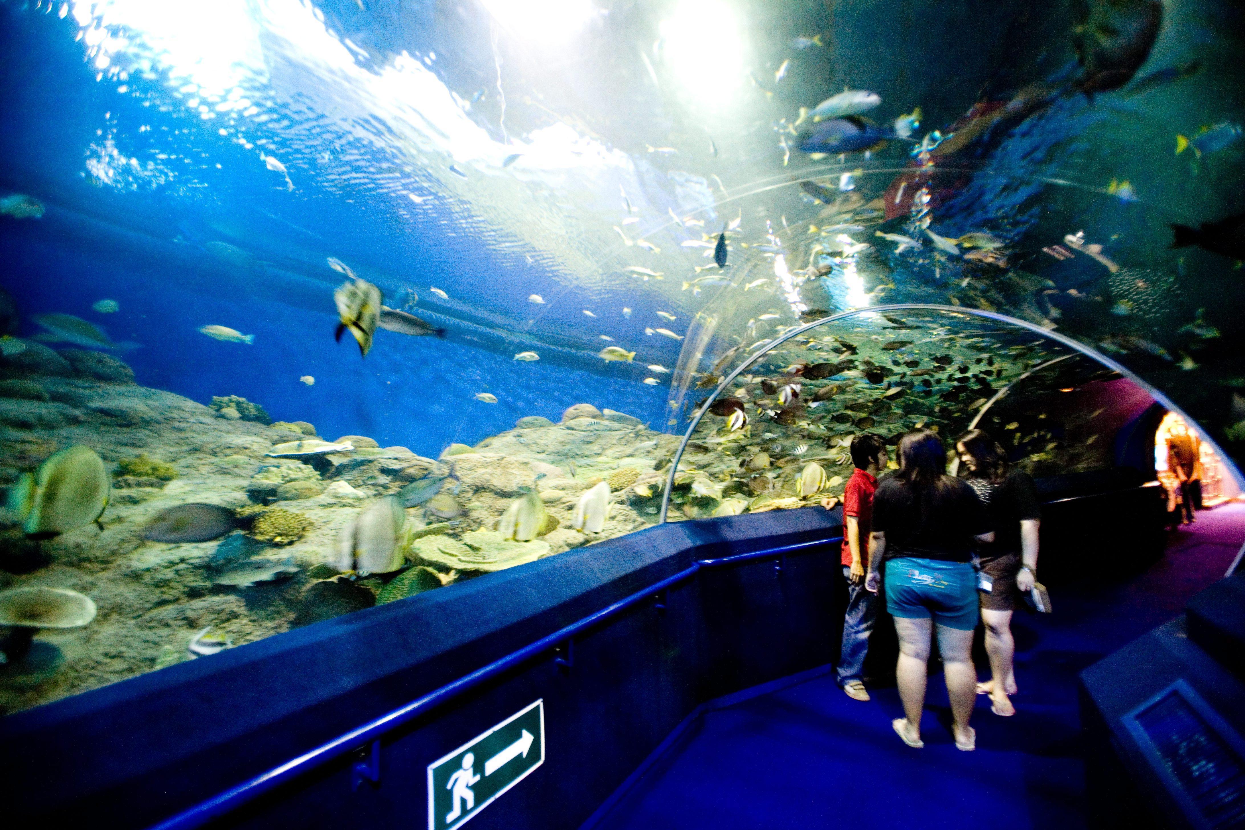 Underwater World Pattaya at Chong Buri *** Local Caption *** อันเดอร์วอเตอร์ เวิล์ด พัทยา จังหวัดชลบุรี