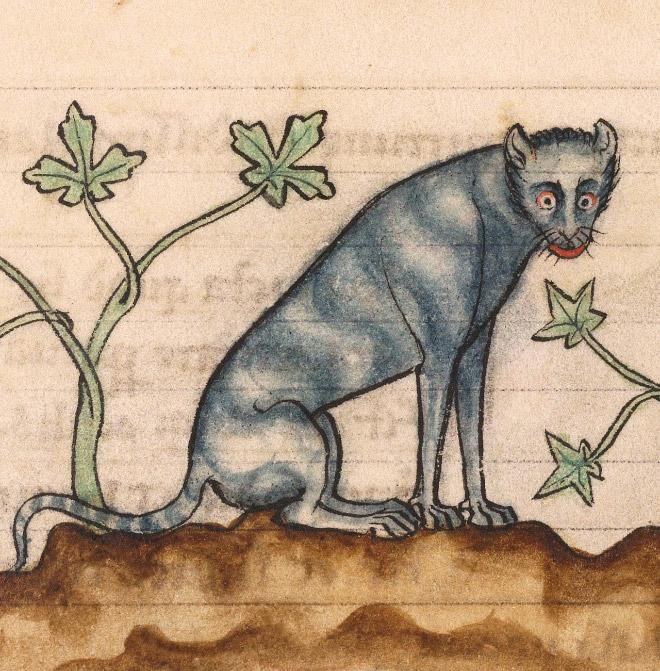 20 středověkých svědectví o divné povaze koček - ugly-cat01