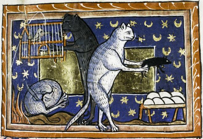20 středověkých svědectví o divné povaze koček - ugly-cat14