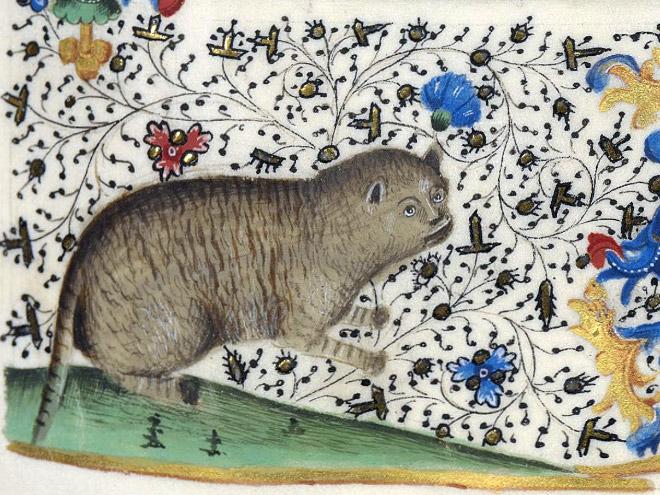 20 středověkých svědectví o divné povaze koček - ugly-cat3
