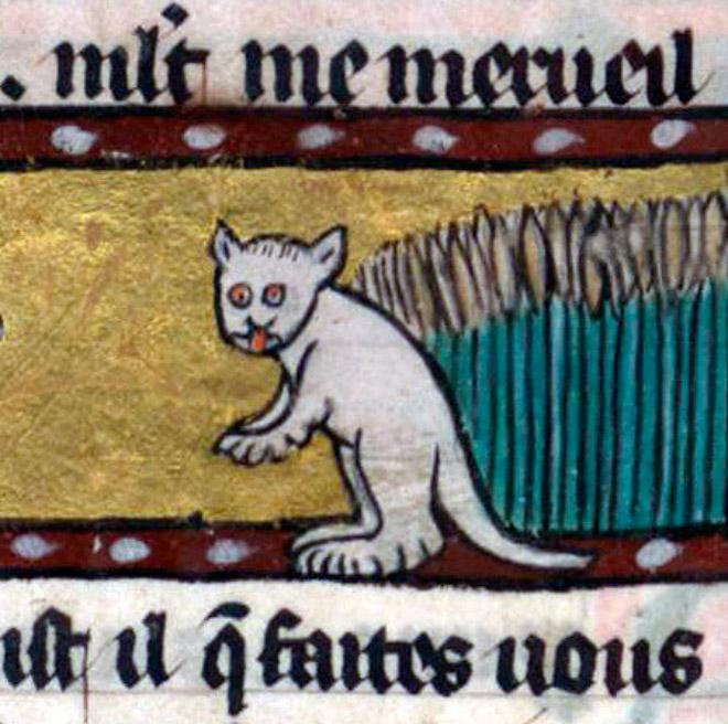 20 středověkých svědectví o divné povaze koček - ugly-cat4