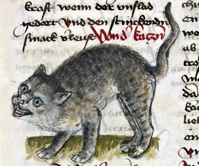 20 středověkých svědectví o divné povaze koček - ugly-cat8