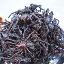 Podívejte se na ta nejšílenější jídla na světě - 09-smazene-obrovske-tarantule-sezenete-na-temer-kazdem-trzisti-v-kambodzi