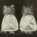 Nepřehlédněte retro fotografie těchto rozkošných šelmiček! - 25