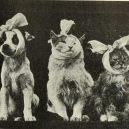 Nepřehlédněte retro fotografie těchto rozkošných šelmiček! - 26