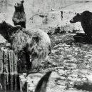 Vyhlazovací tábor Treblinka pod krutovládou Kurta Franze - 3202299581884999829