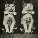 Nepřehlédněte retro fotografie těchto rozkošných šelmiček! - 40