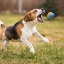 Plastové házedlo proubouzí v psovi agresivitu a stres - 716fq3pk3gl-_sl1500_
