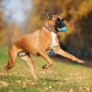 Plastové házedlo proubouzí v psovi agresivitu a stres - ball-thrower-1