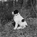 Vyhlazovací tábor Treblinka pod krutovládou Kurta Franze - barry