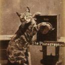Nepřehlédněte retro fotografie těchto rozkošných šelmiček! - btnpointercat01-1-475×728-418×640