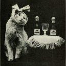 Nepřehlédněte retro fotografie těchto rozkošných šelmiček! - kittens_and_cats_a_book_of_tales_1911_14753047765-443×728-389×640