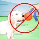 Plastové házedlo proubouzí v psovi agresivitu a stres - play-with-dogs-step-19
