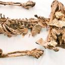 """Starověké """"solné mumie"""": pohleďte do tváře horníkům z dávných dob lidské civilizace - snimek-obrazovky-2018-07-09-v-16-33-42"""