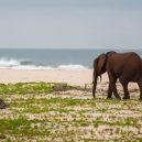 Gabon: to je ráj na zemi i pod vodou - parc-national-loango-681×454
