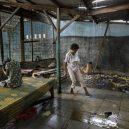 Lidé v klecích a bez toalet: Podívejte se na šokující fotodokumentaci z indonéských blázinců - 22754