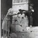 Britský masakr domácích zvířat během 2. světové války - 23passarello-articlelarge-v2