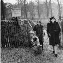 Britský masakr domácích zvířat během 2. světové války - 92027