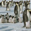 Podívejte se na luxusní kemping v ledovém konci světa - chicks-in-a-creche
