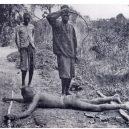 Na hrůzy v Kongu za vlády Leopolda II. Belgického se téměř zapomnělo - leopold-ii-whipping