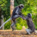Nejvtipnější fotografie zvířat roku 2018 - snimek-obrazovky-2018-10-15-v-9-52-39