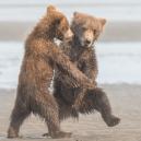 Nejvtipnější fotografie zvířat roku 2018 - snimek-obrazovky-2018-10-15-v-9-53-28