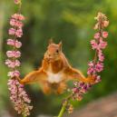 Nejvtipnější fotografie zvířat roku 2018 - snimek-obrazovky-2018-10-15-v-9-56-40