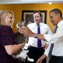 Larry – z útulku do sídla britských premiérů - 1024px-Larry_the_Cat_-_May_2011