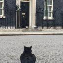 Larry – z útulku do sídla britských premiérů - 36A22BFC00000578-3710487-image-m-20_1469617682593