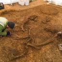 Pohřbený vůz s jezdcem i zapřaženými koňmi nadchl archeology - Snímek obrazovky 2018-12-21 v11.39.10