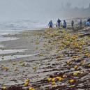 Slavná havárie: gumové kachničky zaplavily Tichý oceán - 49899077_625714041193295_8018157565957373952_n