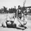 Zvířata a válka. 14 fotografií zachycující obvyklé i neobvyklé způsoby využití zvířat v armádě - camel-soldier