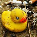 Slavná havárie: gumové kachničky zaplavily Tichý oceán - duck.jpg.653x0_q80_crop-smart