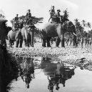 Zvířata a válka. 14 fotografií zachycující obvyklé i neobvyklé způsoby využití zvířat v armádě - elephant-tanks