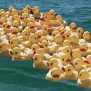 Slavná havárie: gumové kachničky zaplavily Tichý oceán - floatees