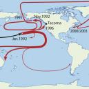 Slavná havárie: gumové kachničky zaplavily Tichý oceán - Friendly_Floatees