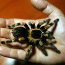 Tarantule držená jako rukojmí a další zločiny, které by vás ani ve snu nenapadly - gettyimages-2080076