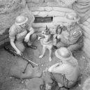 Zvířata a válka. 14 fotografií zachycující obvyklé i neobvyklé způsoby využití zvířat v armádě - mark-dog