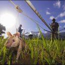 Zvířata a válka. 14 fotografií zachycující obvyklé i neobvyklé způsoby využití zvířat v armádě - miner-rat