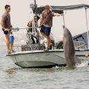 Zvířata a válka. 14 fotografií zachycující obvyklé i neobvyklé způsoby využití zvířat v armádě - navy-dolphin