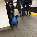 Nové nařízení komplikuje život newyorským pejskařům. Podívejte se, jak vtipně si s problémem poradili - nyc-subway-dog1