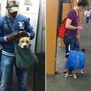 Nové nařízení komplikuje život newyorským pejskařům. Podívejte se, jak vtipně si s problémem poradili - nyc-subway-dog12