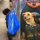 Nové nařízení komplikuje život newyorským pejskařům. Podívejte se, jak vtipně si s problémem poradili - nyc-subway-dog19