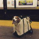 Nové nařízení komplikuje život newyorským pejskařům. Podívejte se, jak vtipně si s problémem poradili - nyc-subway-dog5