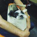 Nové nařízení komplikuje život newyorským pejskařům. Podívejte se, jak vtipně si s problémem poradili - nyc-subway-dog6
