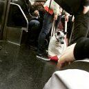 Nové nařízení komplikuje život newyorským pejskařům. Podívejte se, jak vtipně si s problémem poradili - nyc-subway-dog8