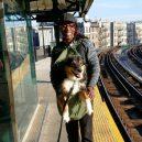 Nové nařízení komplikuje život newyorským pejskařům. Podívejte se, jak vtipně si s problémem poradili - nyc-subway-dog9