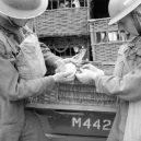 Zvířata a válka. 14 fotografií zachycující obvyklé i neobvyklé způsoby využití zvířat v armádě - pigeon-message