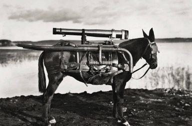 Osli byli často využíváni pro přenos zbraní. Na fotografii z roku 1930 můžete vidět osla s raketometem na zádech