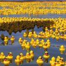 Slavná havárie: gumové kachničky zaplavily Tichý oceán - rubber_duck_sea_by_whispering_hills_1000_673_84_c1